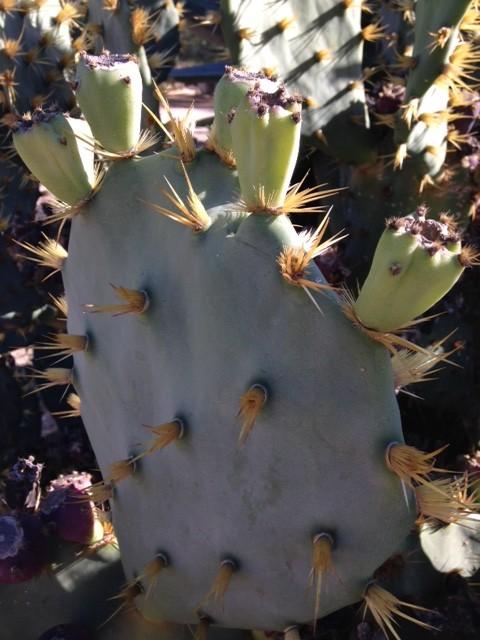 botanicactus